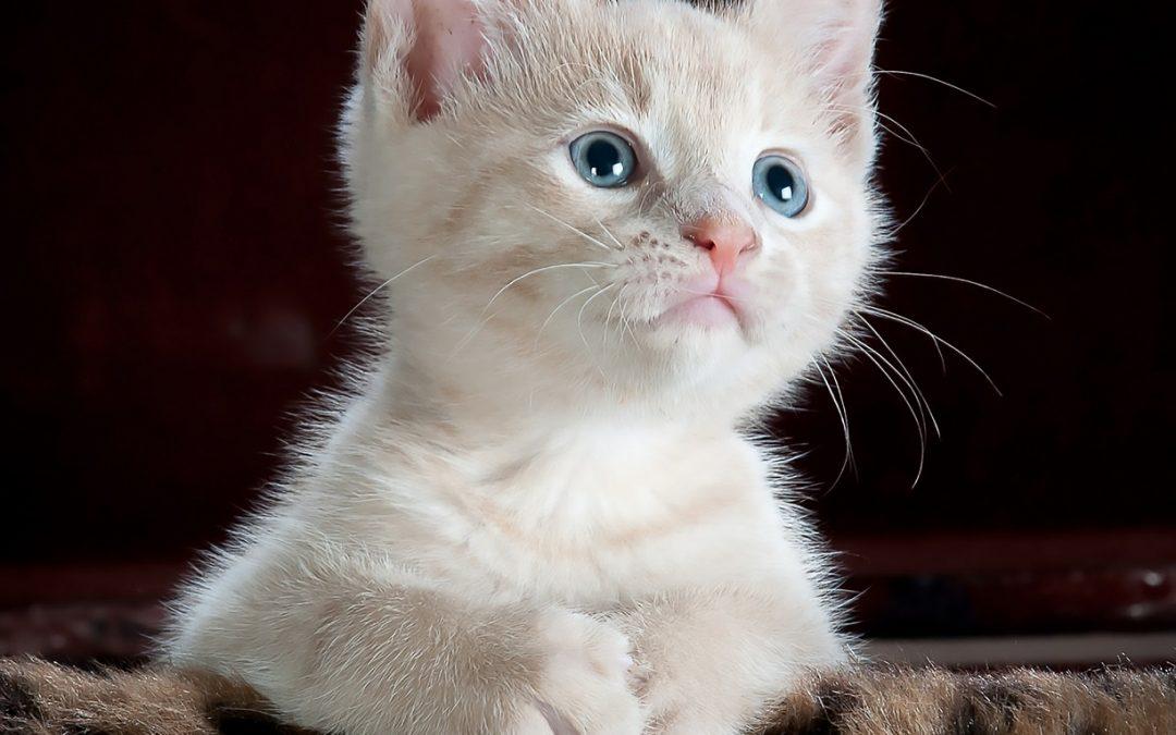 Downsizer voor een dame met katten