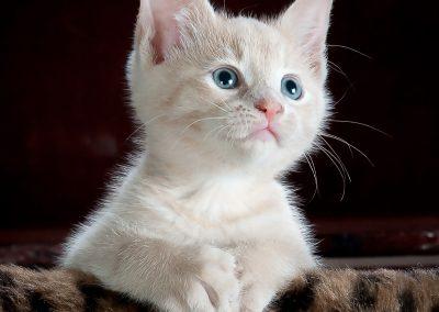 Downsizer pour une dame avec des chats